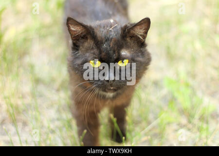 Photo of a sad dirty black stray cat on green grass - Stock Photo