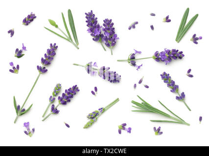 Lavender flowers isolated on white background. Top view, flat lay - Stock Photo