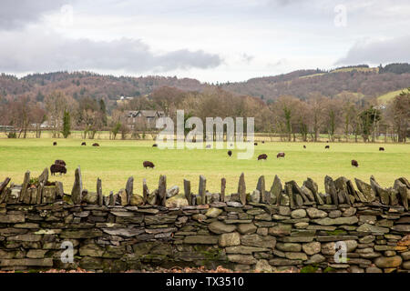 Countryside and farm around the village of Coniston in Lkae District national park,Cumbria,England - Stock Photo