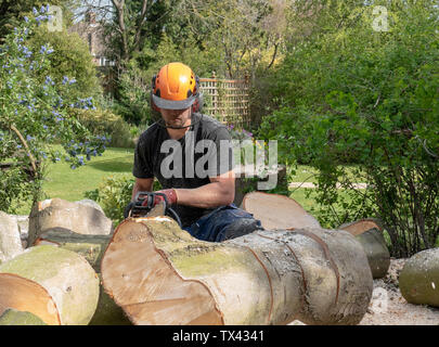 A Tree Surgeon or Arborist uses a chainsaw to cut up a felled tree. - Stock Photo