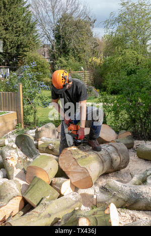 A tree Surgeon or Arborist uses a chainsaw to cut up a felled tree. He is wearing safety equipment - Stock Photo
