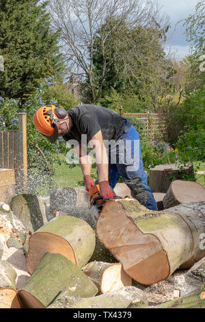 An Arborist or tee surgeon uses a chainsaw to cut up a fallen tree. - Stock Photo
