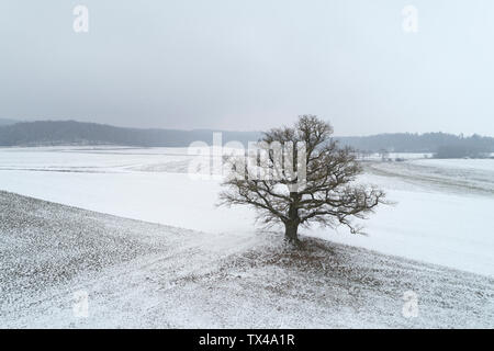 Germany, Bavaria, single old oak tree in winter landscape - Stock Photo