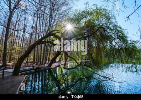 Germany, Augsburg, Siebentischwald, white willow, Salix Alba, at Stempflesee - Stock Photo