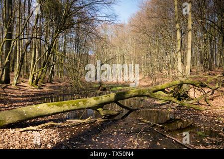 Germany, Mecklenburg-Western Pomerania, Ruegen, Jasmund National Park, wetland - Stock Photo