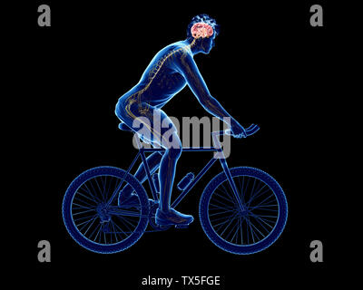 3d rendered illustration of a cyclists brain - Stock Photo