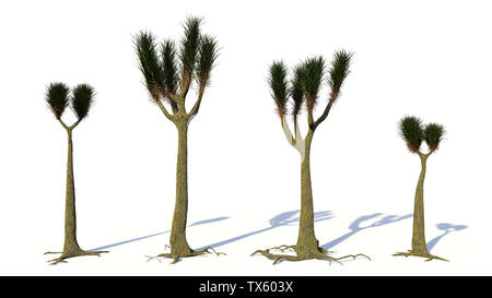 Sigillaria group, tree-like plant from the Carboniferous and Permian period isolated on white background - Stock Photo