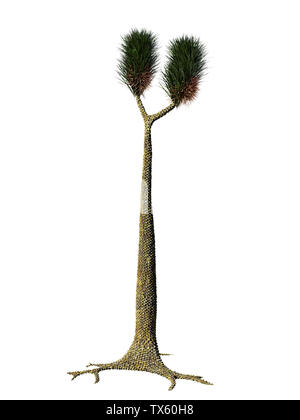 Sigillaria, tree-like extinct plant from the Carboniferous and Permian period isolated on white background - Stock Photo
