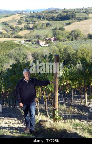Former italian prime minister and minister of foreing affairs Massimo D'alema  in the vineyard of his estate 'Cantina La Madeleine' where he produce w - Stock Photo