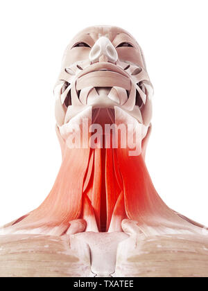 3d rendered medically accurate illustration of painful neck muscles - Stock Photo