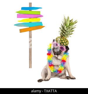 summer pug dog sitting down with colorful hawaiian flower garland, pink sunglasses and pineapple hat, next to wooden beach sign post on pole, isolated - Stock Photo