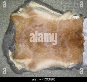 "'Deutsch: Hauskaninchenfell ""Neuseeländer"". Gesehen beim Rauchwarenhändler Wolfgang Czech (geb. 1931), in 2. Generation Spezialist für Kaninfelle, Frankfurt/Main, Niddastraße. English: Domestic rabbit fur skin, type: New Zealand; 8 March 2009; Own work; --Kürschner (talk) 20:32, 24 March 2009 (UTC); ' - Stock Photo"
