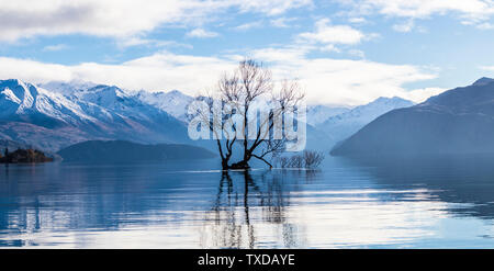 The Wanaka tree in Wanaka, New Zealand - Stock Photo