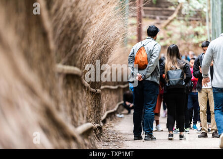 Kyoto, Japan - April 11, 2019: Arashiyama bamboo forest park during day with back of couple and many people tourists on path - Stock Photo