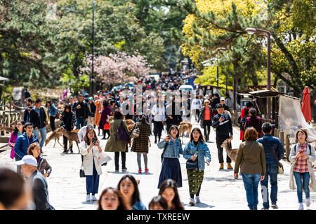Nara, Japan - April 14, 2019: People tourists many crowd walking on grounds of Todaji temple in city during day - Stock Photo