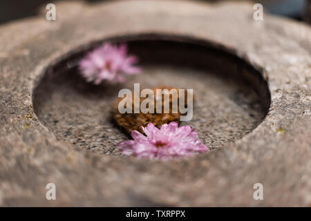Japanese flower stone basin with floating pink flowers on water in zen spa - Stock Photo