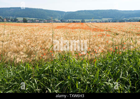 View of Bodenfelde, district of Northeim, Lower Saxony, Germany, Europe - Stock Photo