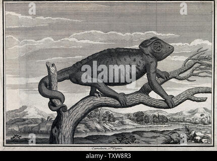 A chameleon on a branch with landscape background. Etching. - Stock Photo