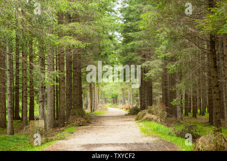 View of Dolomites Alps in South Tyrol - Stock Photo