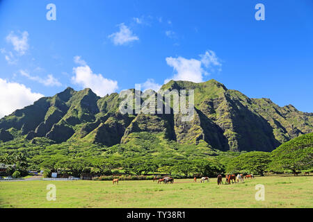 Horses on Kualoa Ranch - Oahu, Hawaii - Stock Photo