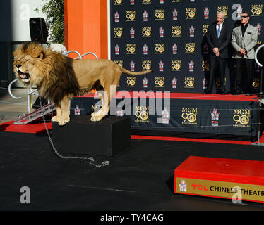 Actor Sylvester Stallone (R) and Metro-Goldwyn-Mayer (MGM) CEO Gary Barber look on as MGM mascot Leo the Lion is immortalized with a paw print ceremony in the forecourt of TCL Chinese Theatre (formerly Grauman's) in the Hollywood section of Los Angeles on January 22, 2014. MGM commenced a year-long global campaign to honor the studio's 90-year legacy and film catalog with the ceremony.  UPI/Jim Ruymen - Stock Photo