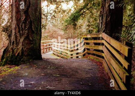 A narrow pathway in a forest with a wooden plank fence - Stock Photo