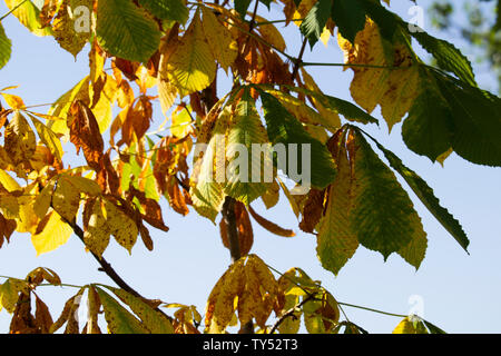 branch with yellow and green leaves. Garden in autumn,Yellow green leaves on a branch against a cloudy sky - Stock Photo