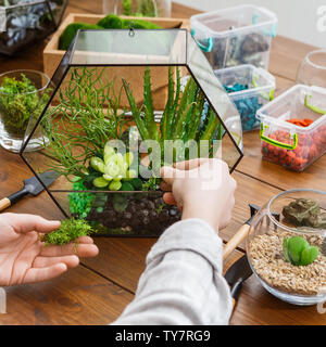 Woman replanting succulent plants in glass florarium vase on wooden table. - Stock Photo