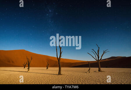 Dead trees under a starry blue early morning sky with the ochre dunes in the background. Dead Vlei, Sossusvlei, Namib-Naukluft National Park, Namibia - Stock Photo