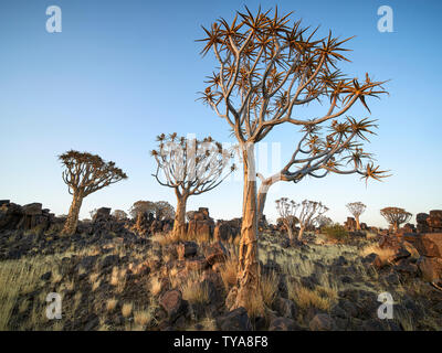The Mesosaurus Fossil Site and Quiver Tree Forest in full colour with a clear and cloudless sky. Mesosaurus Fossil Site, Keetmanshoop, Namibia - Stock Photo