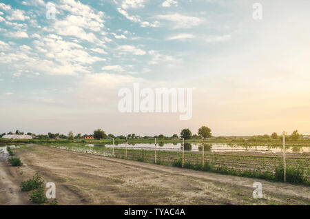 Natural disaster and crop loss risks. Flooded field as a result of heavy rain. Flood on the farm. Agriculture and farming. Ukraine, Kherson region. Se - Stock Photo
