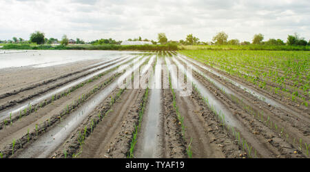 Agricultural land affected by flooding. Flooded field. The consequences of rain. Agriculture and farming. Natural disaster and crop loss risks. Leek a - Stock Photo