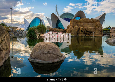 VALENCIA, SPAIN - NOVEMBER 11, 2016. Autumn sunset at flamingo pool of Oceanographic center , Valencia , Spain. - Stock Photo