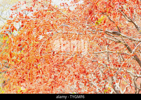 Beautiful tree for wallpaper (oil painting style) - Stock Photo
