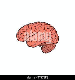 Abstract human brain logo design template - Stock Photo