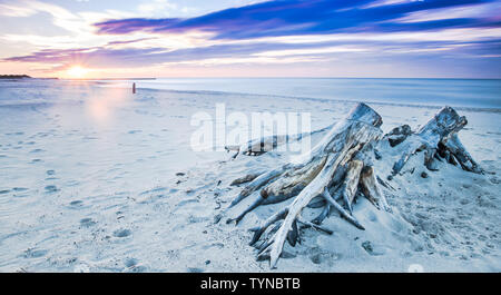 Driftwood on a beach in Ustka, Baltic Sea, Poland - Stock Photo