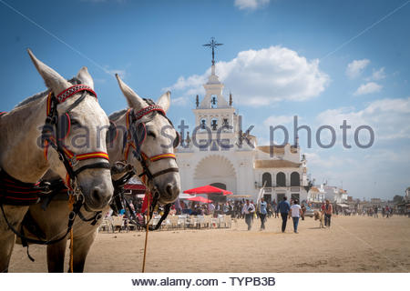 Two mules or donkeys harnessed to a carriage in the village of El Rocio, Andalucia Spain in a close up of their heads - Stock Photo