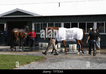 Triple Crown contender Justify walks back to the barn after being washed after a morning workout at Belmont Park on the Friday before the 150th Belmont Stakes in Elmont New York on June 8, 2018.   With a win at the Belmont Stakes Saturday Justify will be the first horse to win the Triple Crown since American Pharoah in 2015.     Photo by Jason Szenes/UPI - Stock Photo