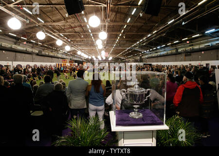 Dogs compete at the 143rd Annual Westminster Kennel Club Dog Show at Pier 92 in New York City on February 11, 2019. The first Westminster show was held on May 8, 1877, making it the second-longest continuously held sporting event in the United States behind only the Kentucky Derby, which was first held in 1875.     Photo by John Angelillo/UPI - Stock Photo