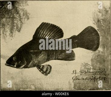 Archive image from page 34 of Die exotischen zierfische in wort - Stock Photo