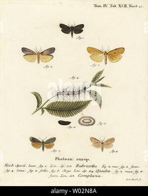 Red-necked footman, Atolmis rubricollis 1,, four-spotted footman, Lithosia quadra 2-6, and buff footman, Katha depressa 7,9. Handcoloured copperplate engraving by Johann Carl Bock after Eugenius Johann Christoph Esper's Die Schmetterlinge in Abbildungen nach der Natur, Erlangen, 1786. - Stock Photo