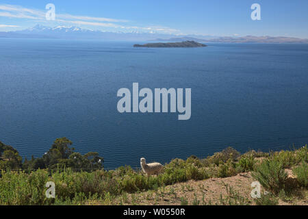 Llama and view of Lake Titicaca from Isla del Sol, Bolivia - Stock Photo