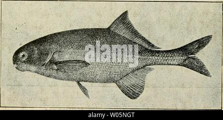 Archive image from page 349 of Die exotischen zierfische in wort - Stock Photo