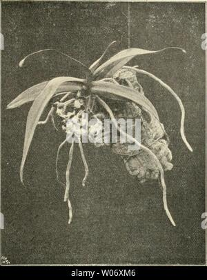 Archive image from page 470 of Die Gartenwelt (1897) - Stock Photo