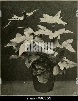 Archive image from page 492 of Die Gartenwelt (1897) - Stock Photo