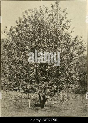 Archive image from page 536 of Die Gartenwelt (1897) - Stock Photo
