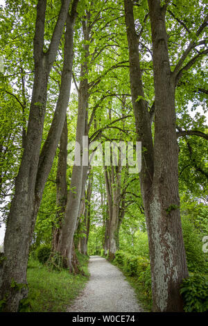 Avenue in spring at Murnau, Bavaria, Germany - Stock Photo