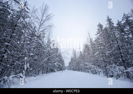 Winter landscape in the snowy forest in Saint-Petersburg, Russia