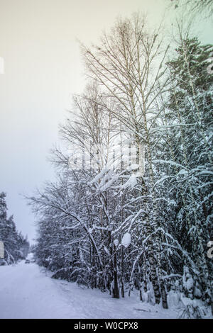 Winter landscape in the snowy forest in Saint-Petersburg, Russia - Stock Photo