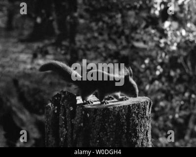 LE SEPTIEME SCEAU LE 7eme SCEAU DET SJUNDE INSEGLET 1957 de Ingmar Bergman d'apres la piece de Ingmar Bergman based on the play by Ingmar Bergman moye - Stock Photo